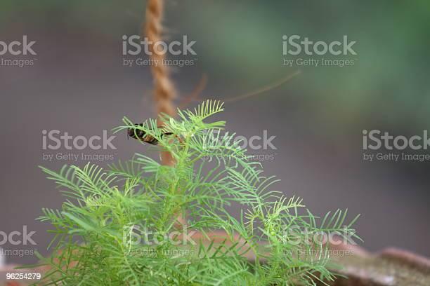 Foto de Os Amantes De Plantas e mais fotos de stock de Animal