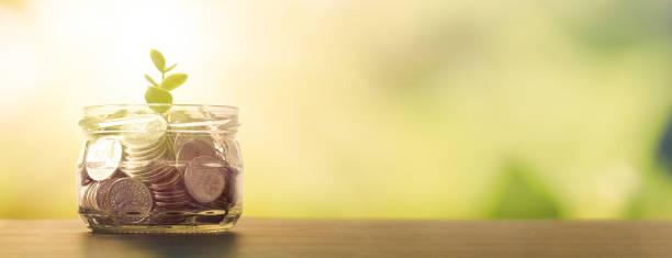 Budget, saving money with growing plant from jar – zdjęcie