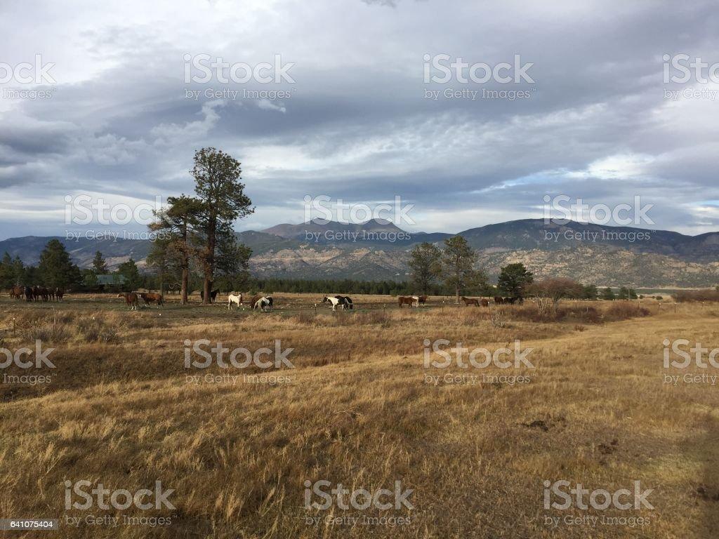 Buena Vista, CO stock photo