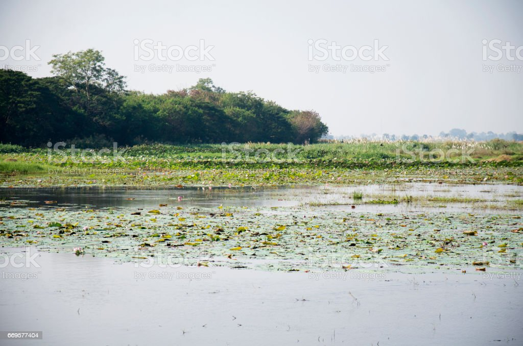 Bueng Si Fai in Phichit, Thailand stock photo