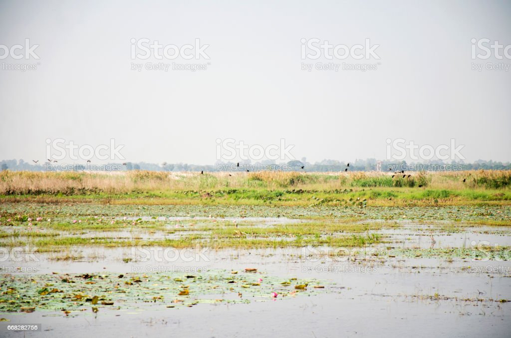 Bueng Si Fai is a large freshwater lake stock photo