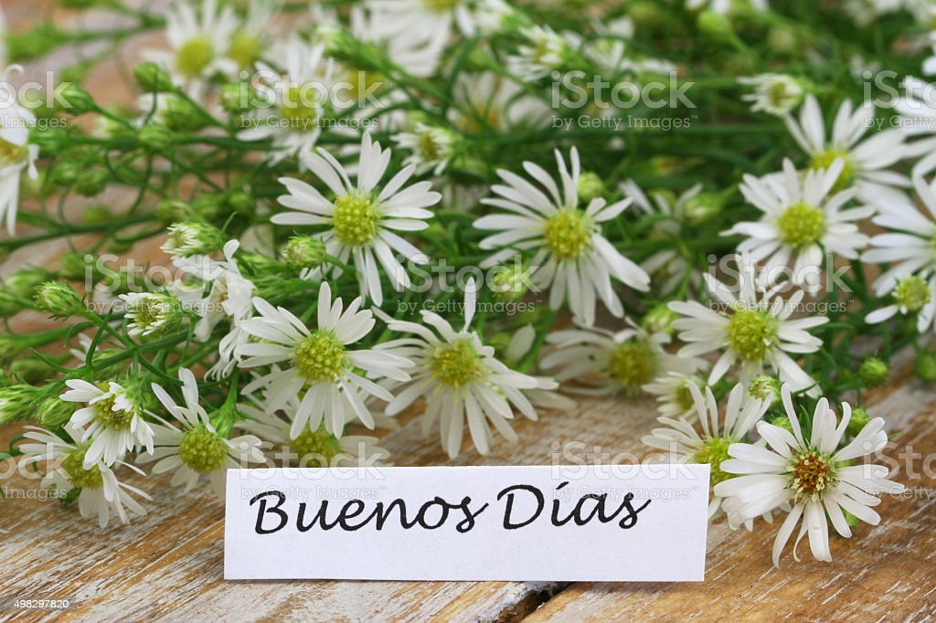 Buenos dias (Good morning in Spanish) card with chamomile flowers stock photo