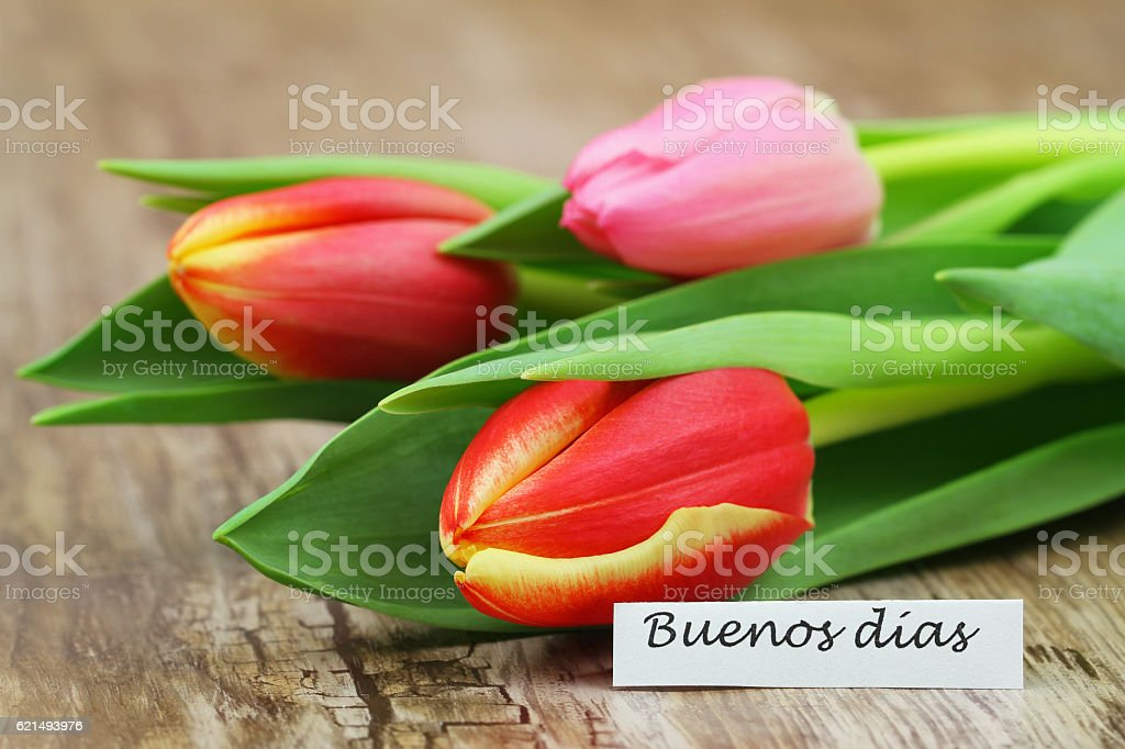 Buenos dias (good morning in Spanish) card with colorful tulips foto stock royalty-free