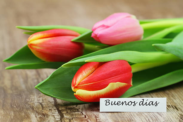 Buenos dias (good morning in Spanish) card with colorful tulips stock photo