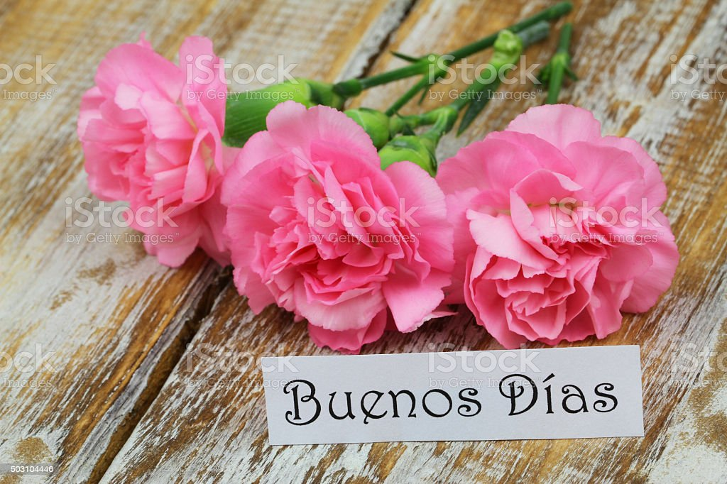 Buenos Dias (Good morning in Spanish) card with pink carnations stock photo