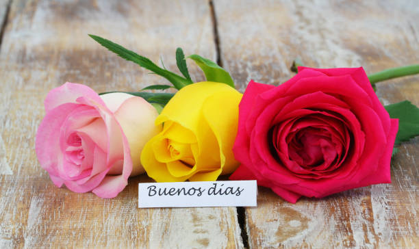 Buenos Dias (good morning in Spanish) card with three colorful roses on rustic wooden surface stock photo