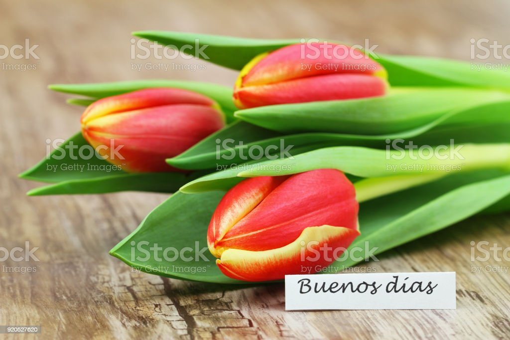 Buenos dias (good morning in Spanish) card with three red and yellow tulips stock photo