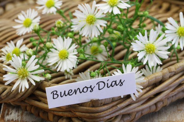 Buenos Dias (which means Good morning in Spanish) with chamomile flowers on wicker tray stock photo