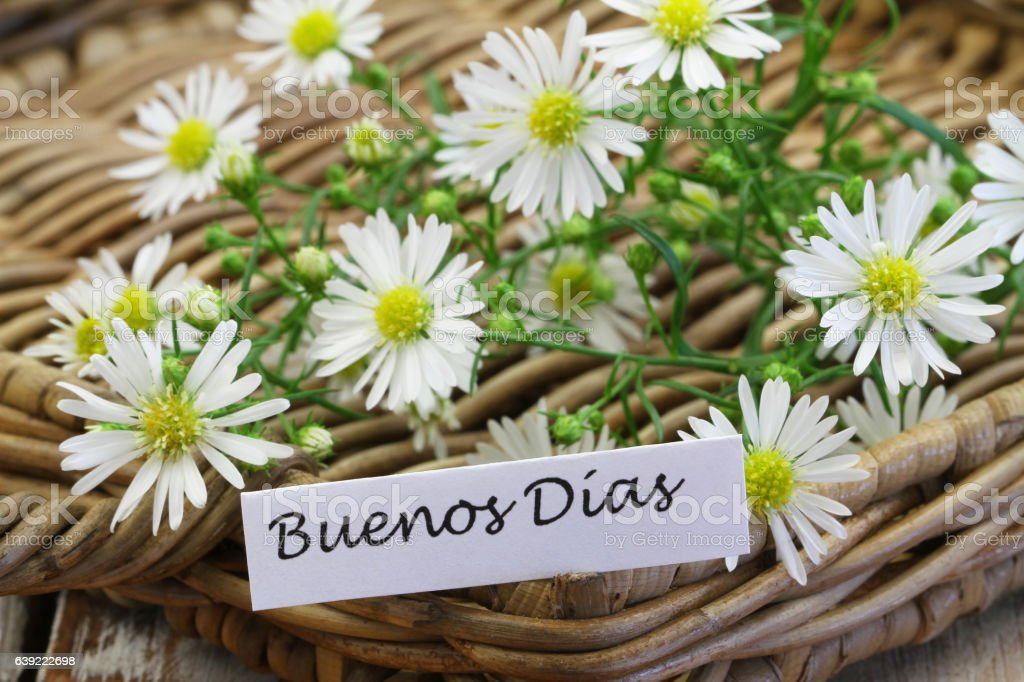 Buenos dias (good morning in Spanish) with chamomile flowers stock photo