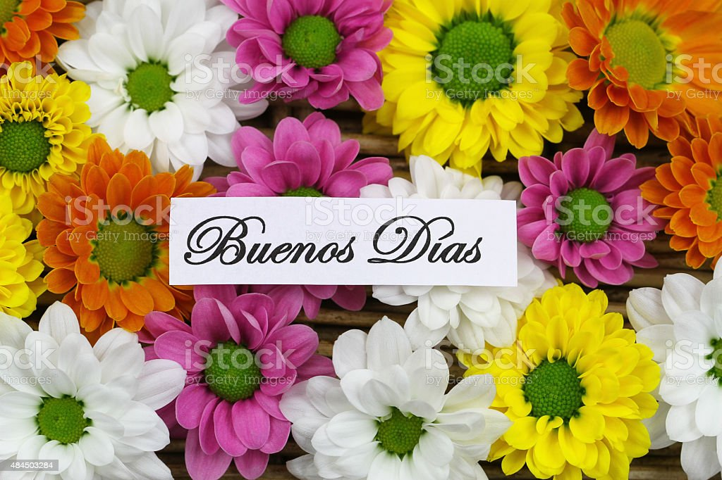 Buenos Dias (Good mornng in Spanish) with colorful Santini flowers stock photo