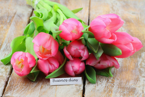 Buenos Dias (Good morning in Spanish) with pink tulips on rustic wooden surface stock photo
