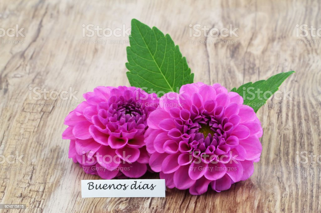 Buenos Dias (which means good morning in Spanish) with two pink dahlia flowers stock photo