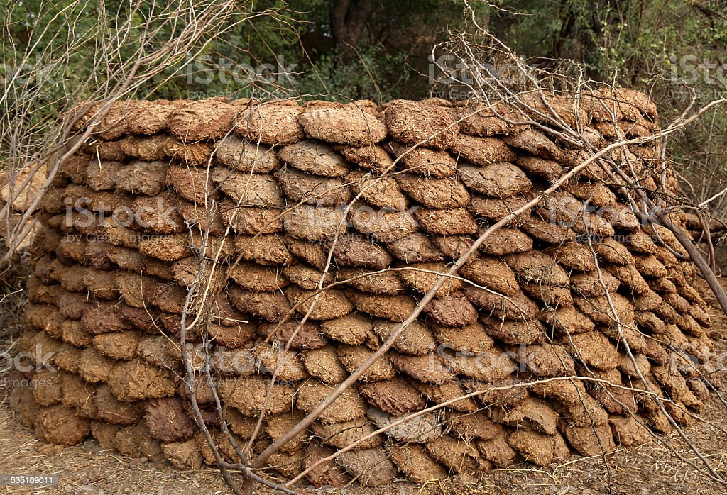 Bufallo and Cow Dung Cakes stock photo