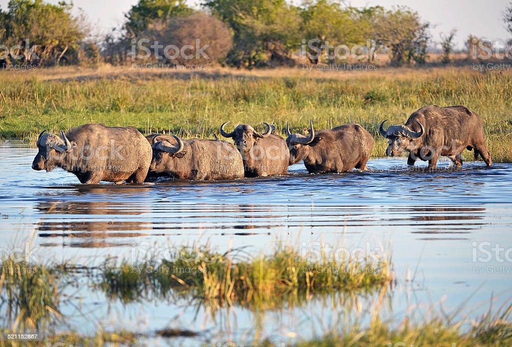 incontri single in Botswana gaigai incontri