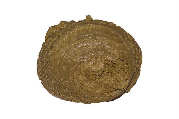 buffalo dung. Clipping path stock photo 9fc68f248245
