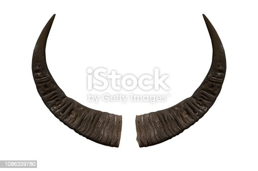 istock Buffalo horn isolated on white background - clipping paths 1086339780