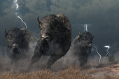 Three buffalo stampede accross the North American prairie. Driven by the flasing lightning and booming thunder of a storm, these bison raise a cloud of dust as they run.  3D Rendering