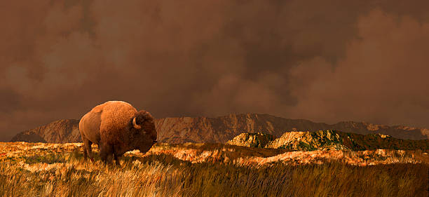 Buffalo in Wyoming bildbanksfoto