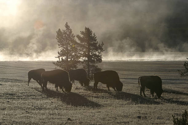 Buffalo Morgen – Foto