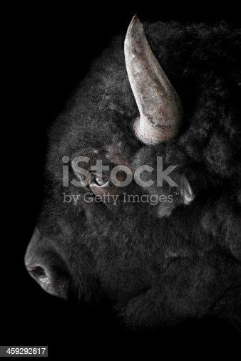 Buffalo on black background