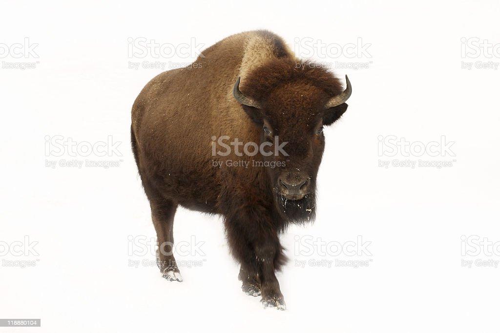 De Buffalo - Photo