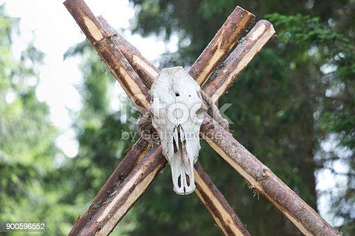 1151385192istockphoto Buffalo skeleton at wood. 900596552