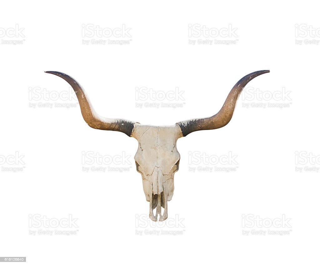 Buffalo skull on white stock photo