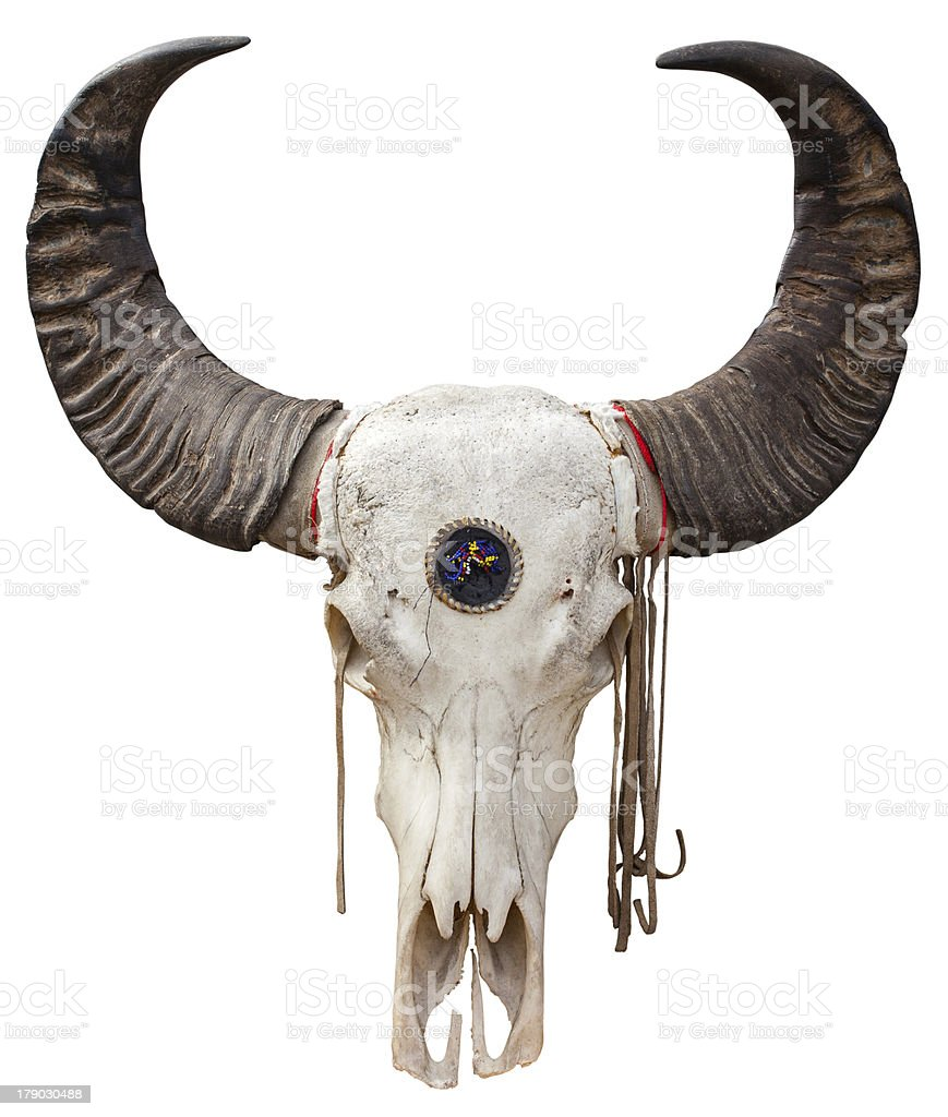 Buffalo skull royalty-free stock photo