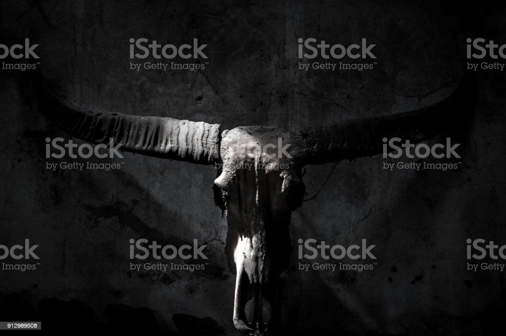 Fotografía de Cráneo De Búfalo Con El Símbolo Místico En Oscuro Y ...