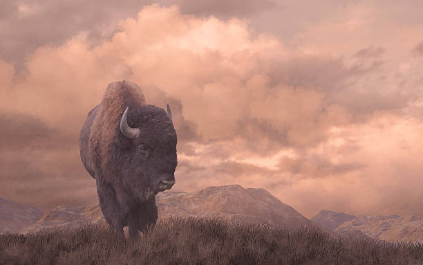 Buffalo soldier born in America bildbanksfoto