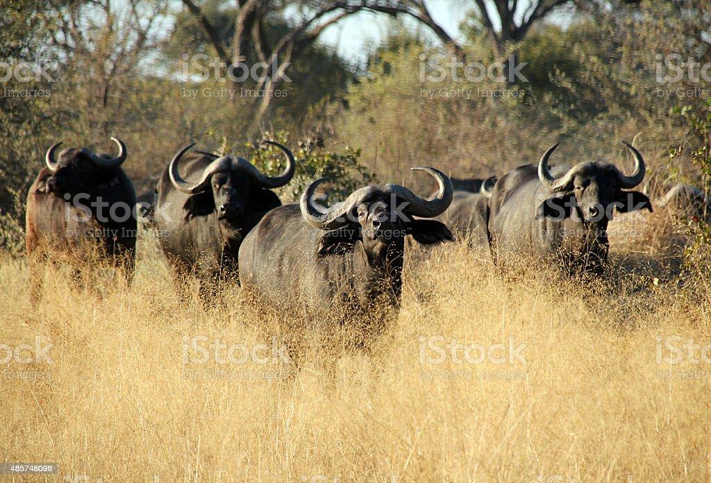 Buffalo Soldiers stock photo