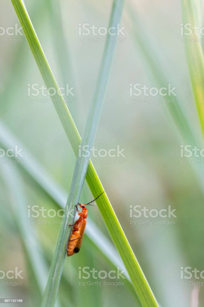 Bug an a straw stock photo