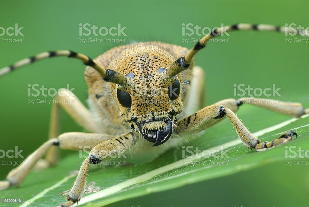 Bug at a dawn royalty-free stock photo