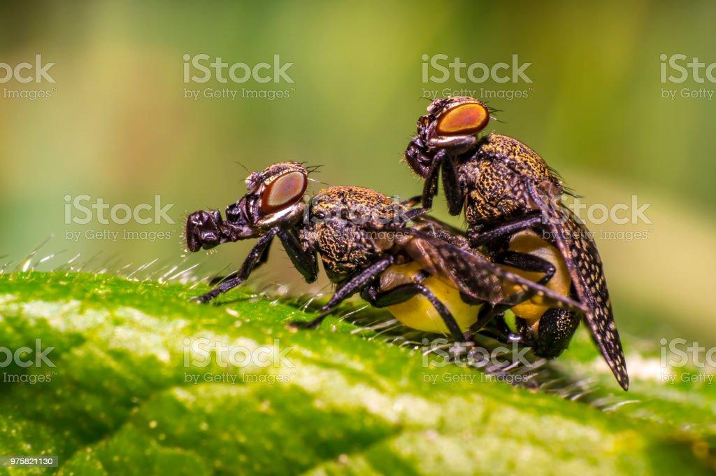 Bug Käfer und fliegen in Makro-Wiese - Lizenzfrei Atelier Stock-Foto