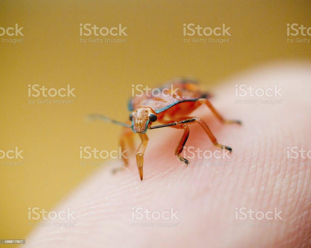Bug biting thumb stock photo