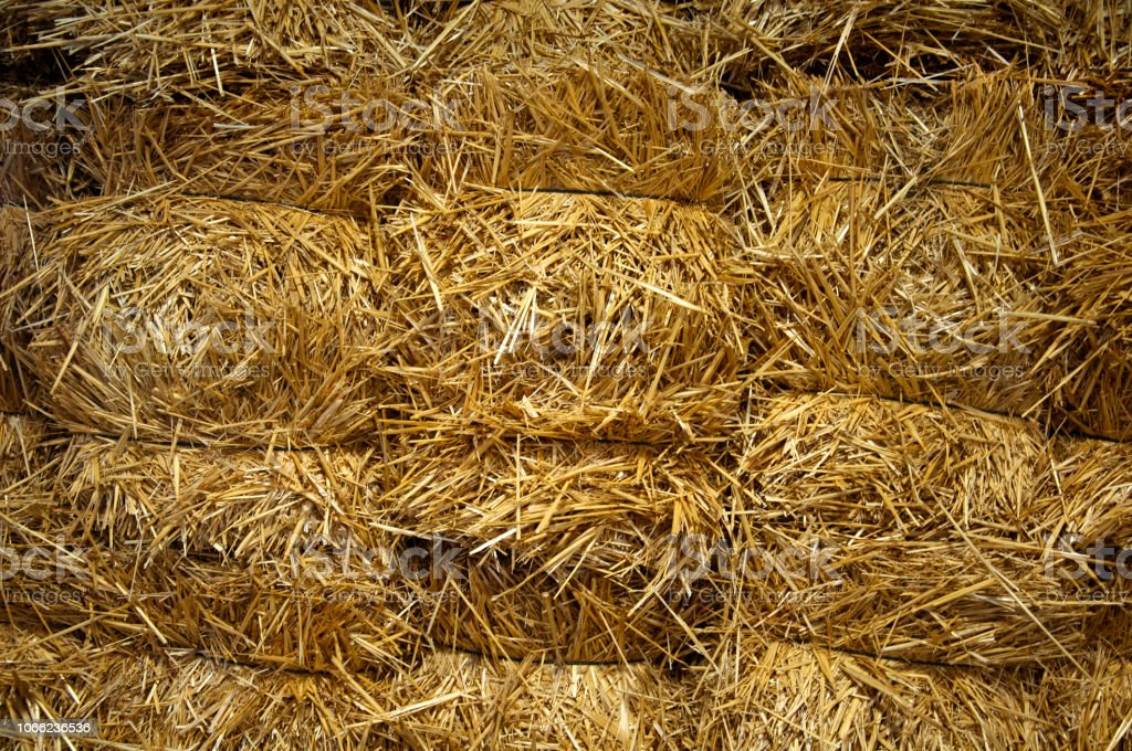 Bug bricks of yellow hay, close-up stock photo