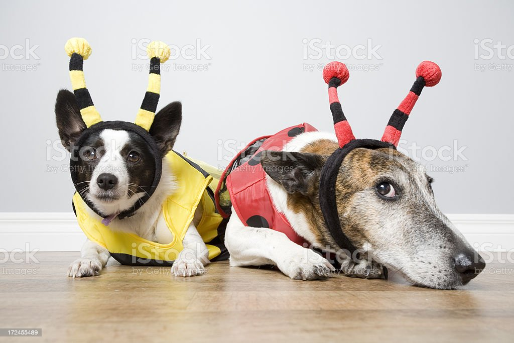 Bug Dogs stock photo