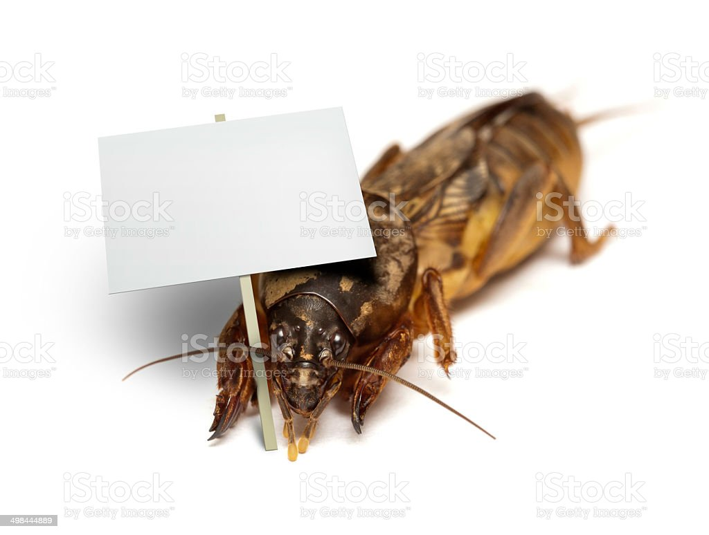 Bug holding blank sign stock photo