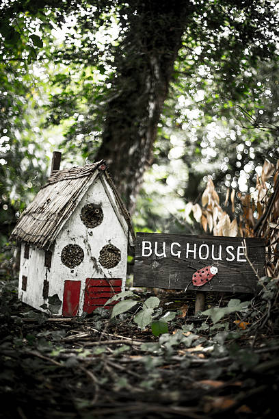 Bug House – Foto