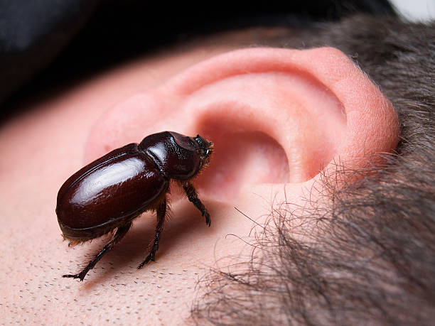 Bug in the ear stock photo