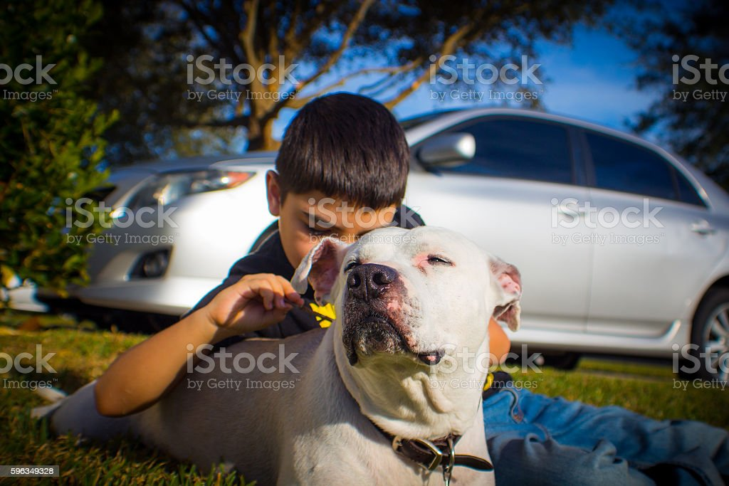 Bug inspection royalty-free stock photo