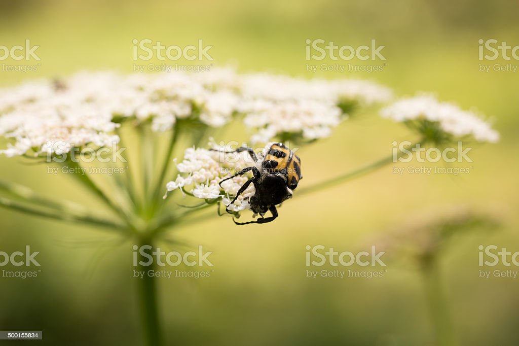 Bug On A Wildflower stock photo