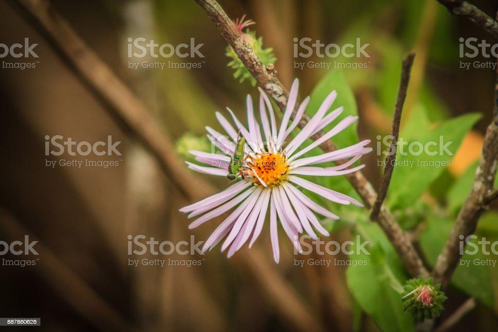 Bug on Flower stock photo