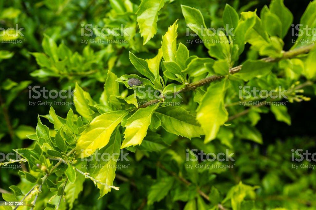 bug on plant leaf close up macro stock photo