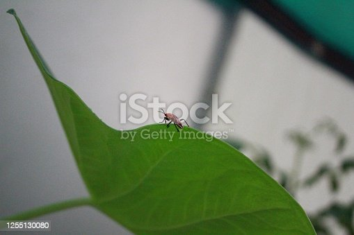 Mesmerizing Picture of a small red bug over a green leaf with a blur background.