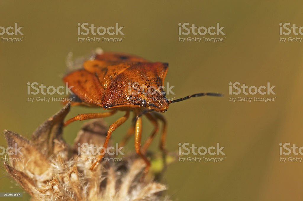 Bug royalty-free stock photo