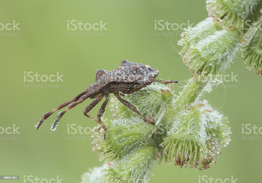 Bug sitting on a blade of grass. royalty-free stock photo