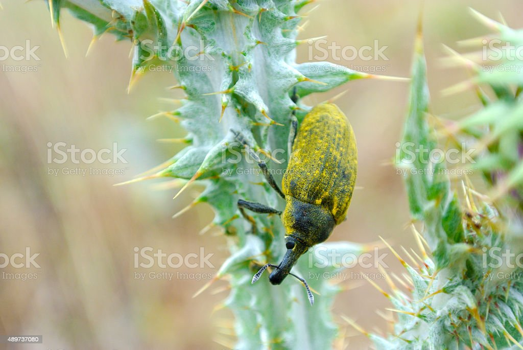 Bug sitting on a plant stock photo