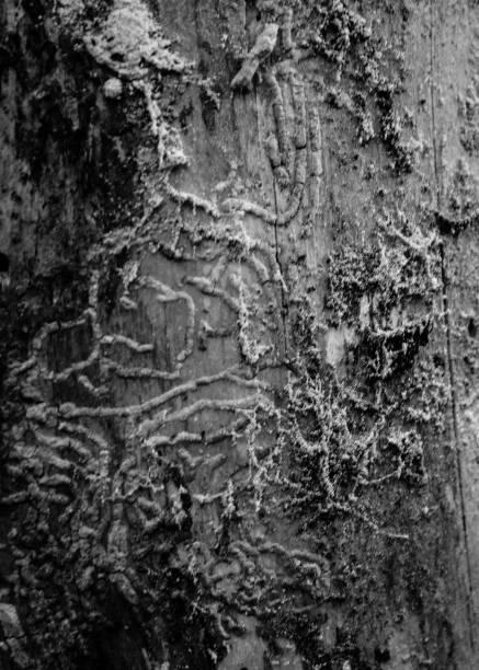 Fehler-Trails auf ein Stück Holz – Foto
