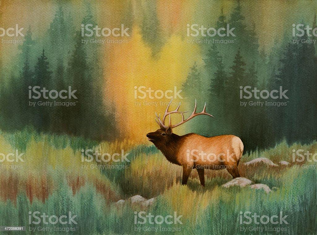Bugling Elk stock photo